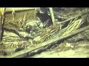 USMC Film: Marines Capture Eniwetok, GRAPHIC 1944/02 (fulll)
