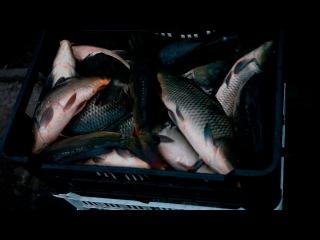 Отлов карпа, амура и толстолобика в рыбном хозяйстве СПК