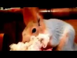 Squirrel with a beard!!!   БЕЛКА-БОРОДАЧ!