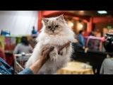 Международная выставка кошек в Парк хаусе