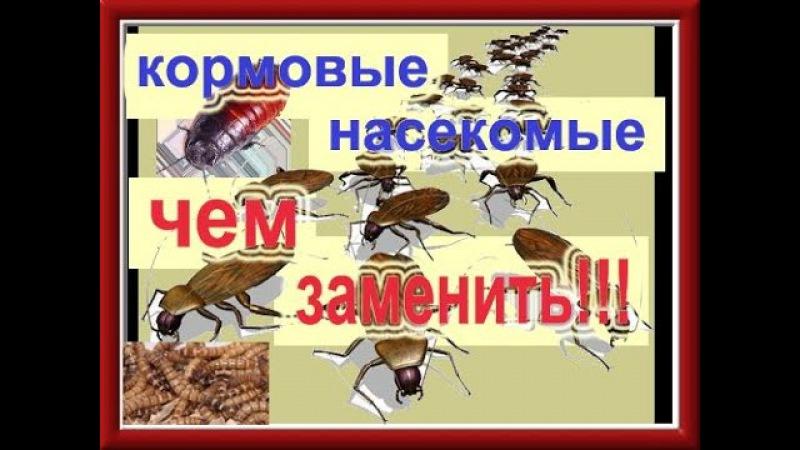 Как вывести муху из опарыша?