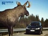 Животные на дороге Пермского края