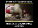 Не верьте живодерам-торгашам. Мясо - жестоко!
