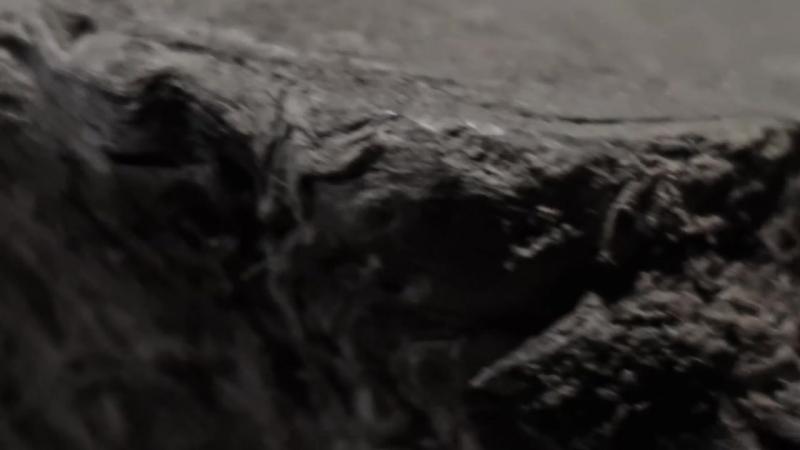 양희은 X 악동뮤지션 (Yang Hee Eun X AKMU) - 나무 (The Tree) MV