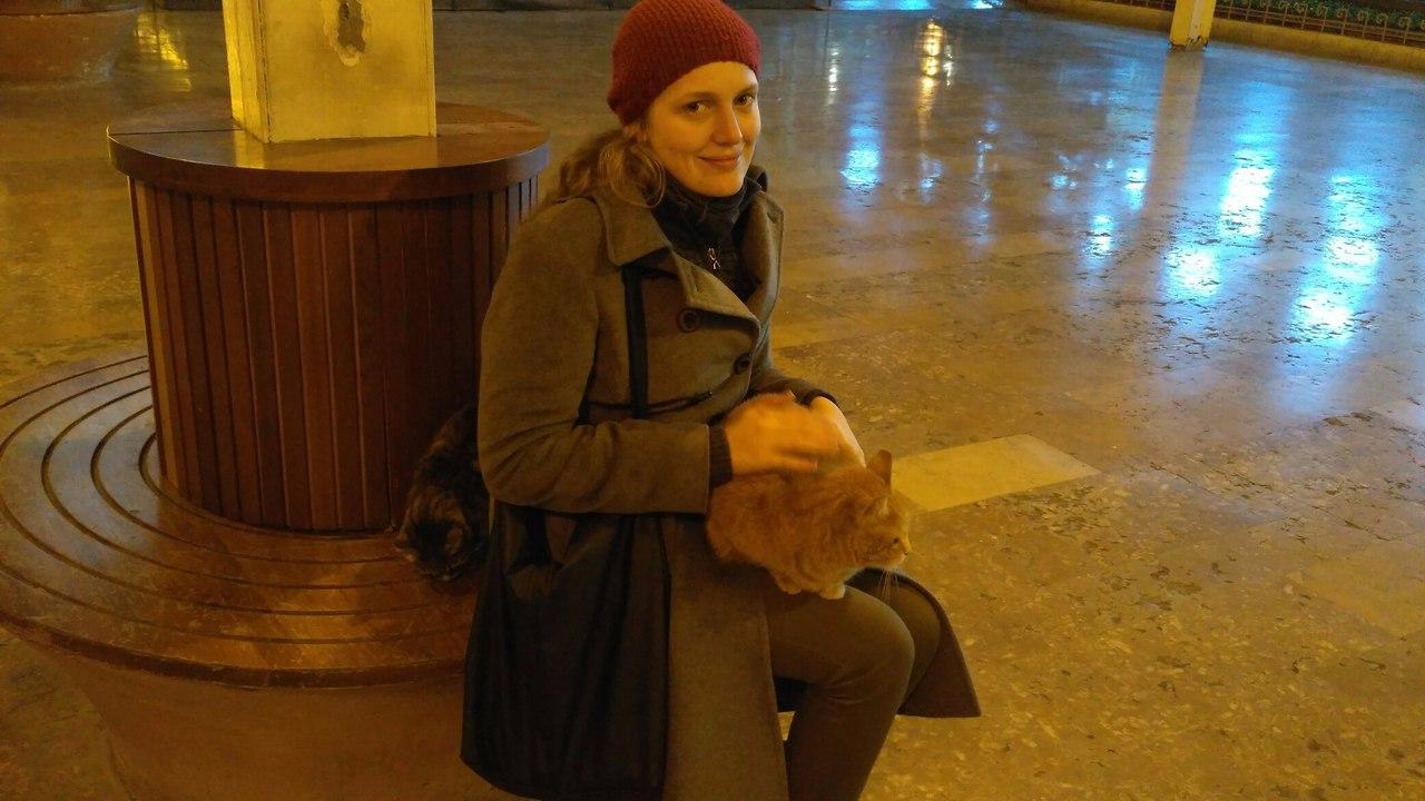 Нужна помощь. Посмотреть жив ли кот в Сиркеджи, Стамбул