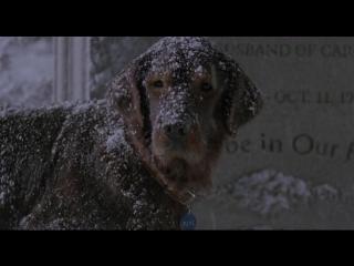 Fluke (1995) ENG