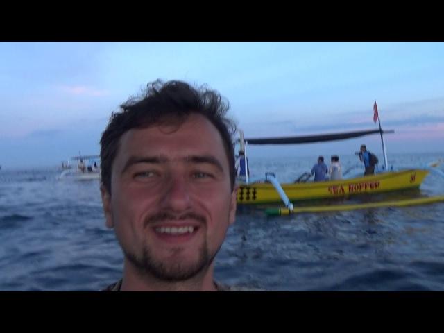Бали В погоне за дельфинами Lovina beach