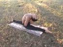 Lot of hatha yoga asanas by Zura Kazishvili