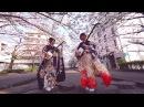 Shamisen Under The Cherry Blossoms 2017 - KiKi 輝36637 津軽三味線