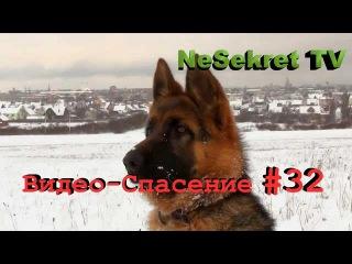 Видео - Спасение 32. Спасаем собаку от холода и голода. Город Улан-Удэ.