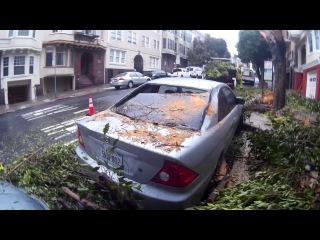 Перед домом упало дерево на машину