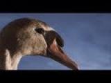 King Creosote &amp Jon Hopkins - Third Swan