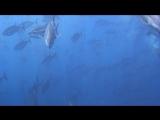 Под водой с... - Мальта. Подводная природа