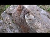 Трость с головой волка