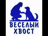 Группа в Солнечногорске. Хаски Арма  узнаёт, что у неё есть задние лапы и ими, оказывается, тоже можно двигать =))).