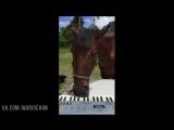 Как я играю на фортепиано