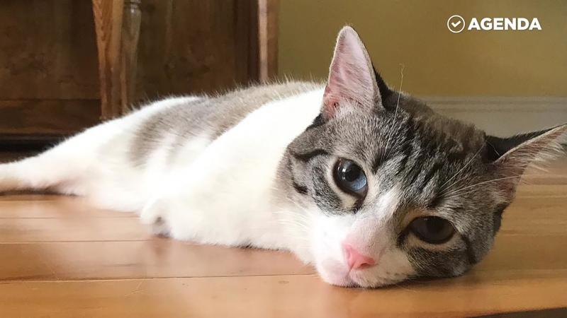 Двулапая кошка