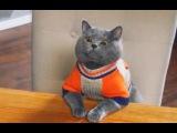 самое смешное видио про котов