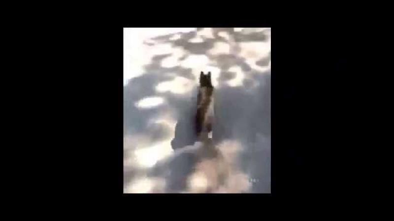 [Минутка позитива] Кот вдвешник