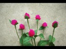 ABC TV | How To Make Globe Amaranth Paper Flowers From Crepe Paper - Craft Tutorial