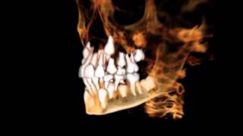 Практика регенерации новых молодых зубов
