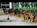 Best Trained Disciplined Dogs 2
