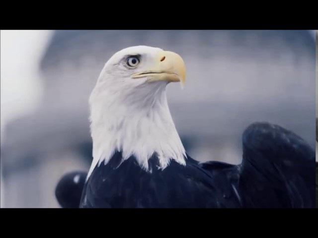 Алёна Рубенс -Электронная птица