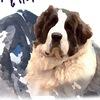 Пиренейский мастиф (Pyrenean Mastiff)
