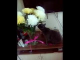 Девочки такие девочки, все любят цветочки