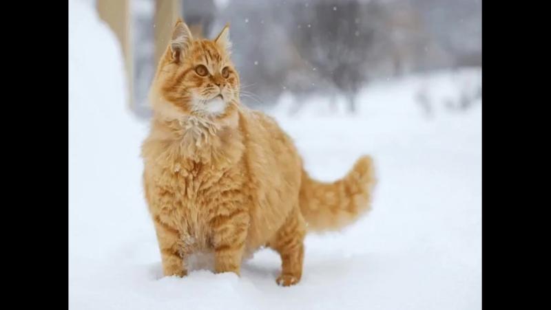 С первым днем зимы Пусть снег идет а с ним и обновленье Что жизнь прекрасна и добра Цени все эти милые мгновенья
