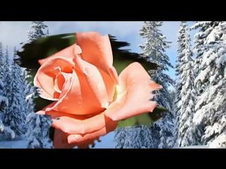Вы прекрасны, как эти музыка и розы!