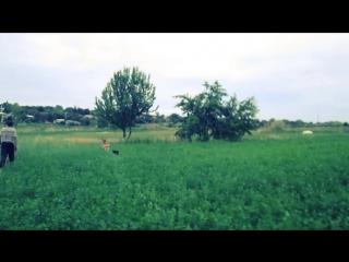 Кейси,Мишка и кот Рыжик