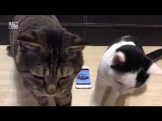 Японские коты научили людей давать им еду по звоночку
