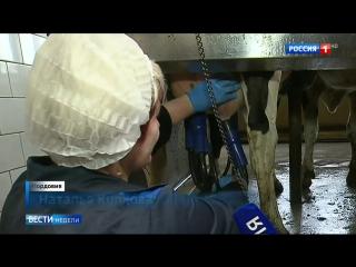 «Гудроновый сыр»: россиянам продают аллергены под видом нормальных продуктов