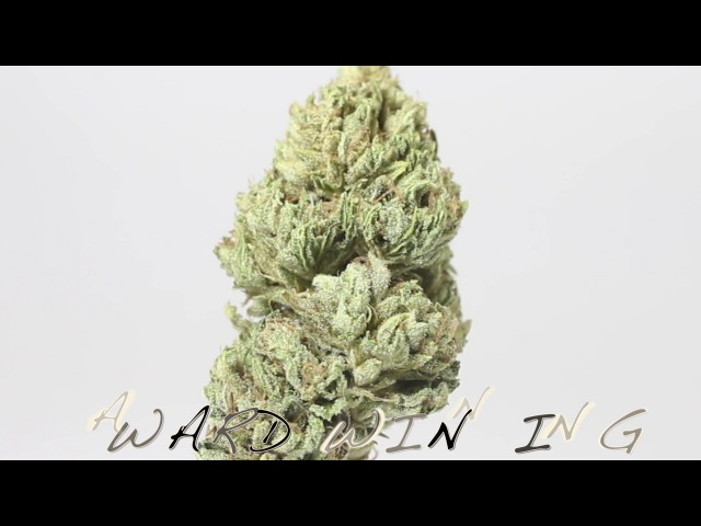 HOW TO GROW MENDO DOPE(SEED To FLOWER)