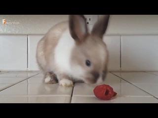 ОЧЕНЬ ВЕСЁЛЫЕ ЖИВОТНЫЕТЕСТ НА ПСИХИКУ)ПРИКОЛЫ С ЖИВОТНЫМИ)Very funny animals)TEST on the psych)