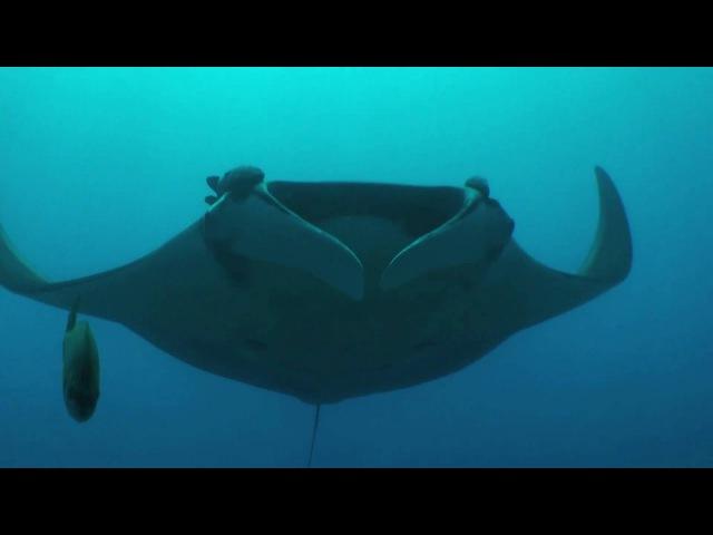 Животные ПОДВОДНОГО Мира - Атлантический Океан. Animal Planet HD