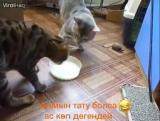 люди уважайте друг друга ведь даже животные знают это смотрите до конца