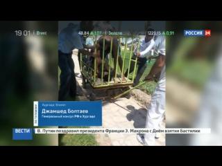 Нападение в Хургаде׃ убийца с ножом охотился на иностранцев