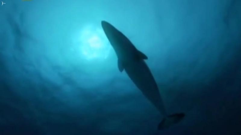 Доисторические хищники 7. Акула-чудовище HD