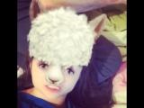 Я маленькая скучающая лама