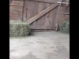Веселые козлята
