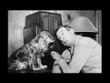 Радио для собак