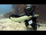 Sea Snakes (HD)  JONATHAN BIRD'S BLUE WORLD
