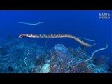 Sea Snake Island  JONATHAN BIRD'S BLUE WORLD