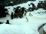 Drum n bass penguin