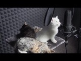 Yiruma  River flows in you(by cats)
