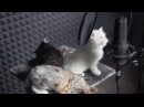 Yiruma – River flows in youby cats