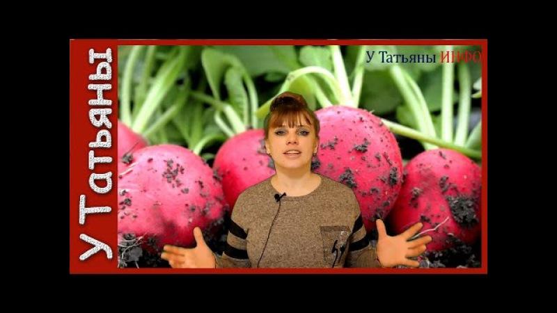Хитрости и тонкости при выращивании редиса.