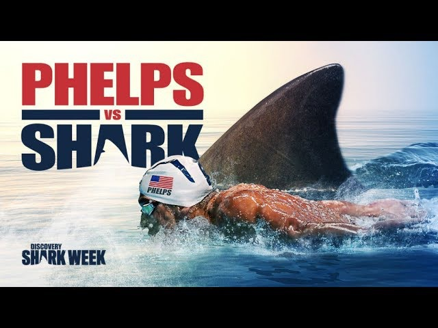 Michael Phelps vs Great White Shark This race Will Shock You Фелпс против Акулы